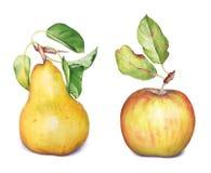 苹果计算机和梨果子 免版税库存照片