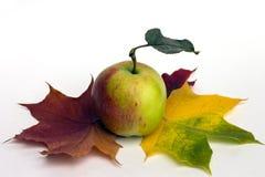 苹果计算机和槭树叶子。 库存图片