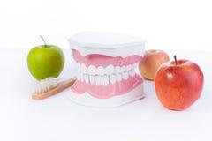 苹果计算机和模型人的牙/牙齿健康 免版税库存图片