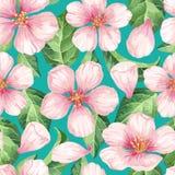苹果计算机开花,瓣和叶子在水彩样式在白色背景 纺织品的,包装纸无缝的样式 免版税库存图片