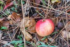 苹果计算机秋天 库存图片