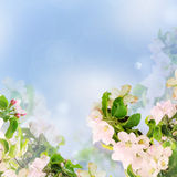 苹果计算机花卉背景 库存照片