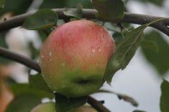 苹果计算机 免版税库存图片