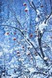 苹果雪结构树 免版税库存照片
