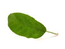 苹果页结构树 免版税库存图片