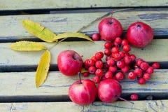 苹果,山脉灰果子(与一个减速火箭的作用) 免版税库存图片