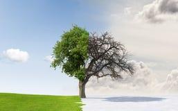 苹果更改的季节结构树 免版税图库摄影
