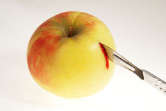 苹果 库存照片