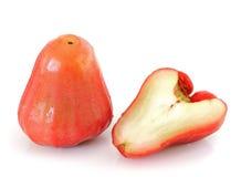 苹果chomphu上升了 免版税库存图片