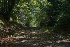 茂盛植物在森林法国里遮蔽一条小径 库存照片