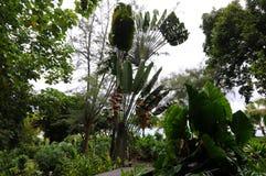茂盛的塔希提岛 免版税库存图片