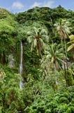 茂盛的植被和瀑布 图库摄影