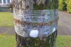 范围昆虫结构树 免版税图库摄影