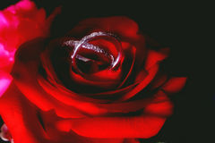 范围玫瑰色婚礼 库存图片