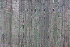 范围老木 免版税库存照片