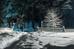 范围在冬天 库存图片