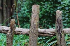 范围老木头 库存照片