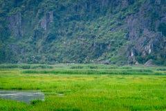 范Long自然保护在Ninh Binh 免版税图库摄影