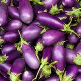 茄子紫色 免版税库存图片