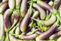茄子紫色 库存照片
