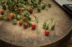 茄属 免版税库存照片