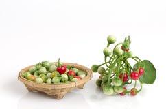 茄属sanitwongsei Craib (茄属trilobatum L ) 免版税库存图片