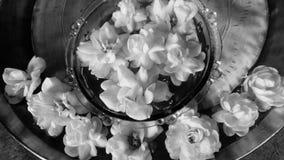 茉莉花和玫瑰 库存照片