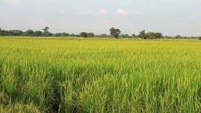 茉莉花米农场在乡下 影视素材