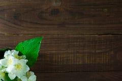 茉莉花花束在老木背景开花 顶视图 图库摄影