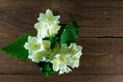 茉莉花花束在老木背景开花 库存图片