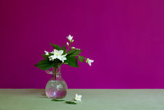 茉莉花花束 库存照片