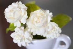 茉莉花花(为泰国的母亲节) 库存图片