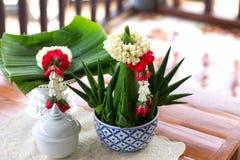 茉莉花诗歌选投入了提供与茉莉花雀鳝的米上面 免版税库存照片