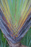 茎棕榈 免版税库存照片