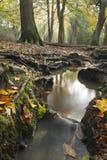 茱蒂森林在秋天 免版税库存照片