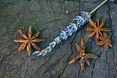 茴香和淡紫色花星在一张木桌上的 库存图片
