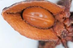 茴香星形 库存图片