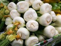 茴香电灯泡在农夫市场上在罗马 免版税库存图片