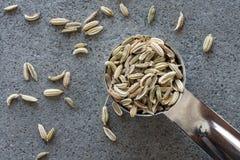 茴香籽 图库摄影