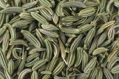 茴香籽 免版税库存图片