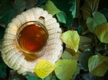 茶与秋叶的 教育的季节 在一个被编织的茶碟的杯,温暖的标志和舒适 免版税库存照片
