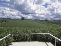 茶农厂背景的白色阳台 免版税库存图片
