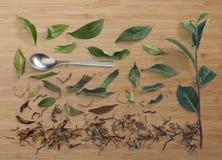 茶分支和叶子用干茶 库存图片