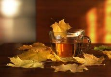 茶和槭树叶子 库存照片
