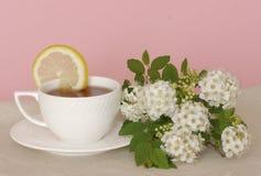 茶和白花 库存图片