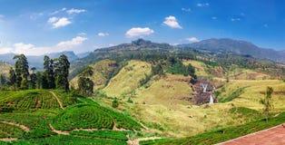 茶园全景在努沃勒埃利耶,斯里兰卡附近的国家 免版税库存照片