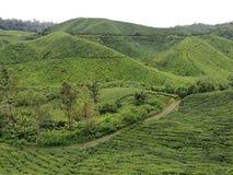 茶园和茶山在喀麦隆高地在怡保,马来西亚 免版税库存图片