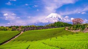 茶园和Mt 富士 股票录像