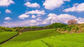茶园和Mt 富士 股票视频