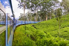 茶园在努沃勒埃利耶区,斯里兰卡 图库摄影